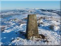 NS3680 : Bromley Muir trig point by Lairich Rig