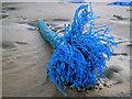 NK0024 : Newburgh: flotsam on the beach : Week 8
