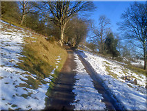 SO2355 : Lane climbing the Hergest Ridge by Trevor Rickard