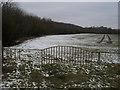 TL1260 : Field by Wood by Shaun Ferguson