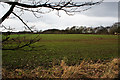 SJ5998 : The line of trees across the field marks the route of a dismantled railway by Ian Greig