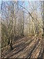 TQ8932 : High Weald Landscape Trail in Ratsbury Wood by David Anstiss