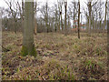 TL6656 : Ditton Park Wood by Hugh Venables