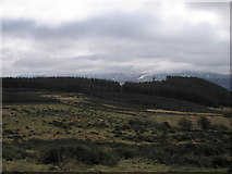 SH6320 : Forest on Ffridd Rhos by Rudi Winter