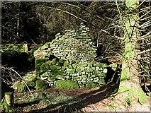 S8551 : Farmhouse Ruin by kevin higgins