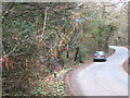 SW7122 : Decorated tree beside the road at Chygarkye Wood by Rod Allday