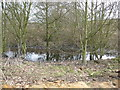 SJ6272 : Pond by Dr Duncan Pepper