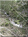 SJ6074 : Small stream forming field boundary by Dr Duncan Pepper