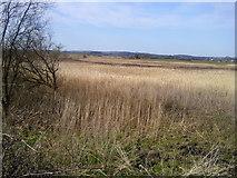 R3676 : Reedbed, Co Clare by C O'Flanagan