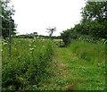 TL1191 : Public Footpath by Andrew Tatlow