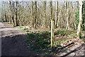 TQ7636 : High Weald Landscape Trail waymark, Angley Wood by N Chadwick