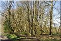 TQ7336 : Water Pond Shaw by N Chadwick