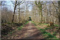 TQ6940 : High Weald Landscape Trail, Sprivers Wood by N Chadwick