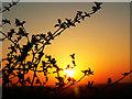 SU2180 : Sunset under Liddington Hill, Swindon : Week 15