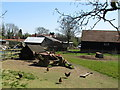 SU7998 : Chickens on farm at Bledlow Ridge by David Hawgood
