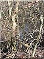 NS7560 : Thankerton Burn by Richard Webb