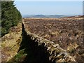 NS3582 : Dry-stone wall on Auchendennan Muir by Lairich Rig
