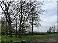 SE0339 : Stand of trees, off Slaymaker Lane by Christine Johnstone