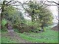 SE2206 : Tanyard Brook near Ingbirchworth by Jonathan Clitheroe