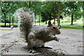 TQ8010 : Squirrel at Alexandra Park by Oast House Archive