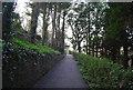 TQ8010 : Path, Alexandra Park by N Chadwick