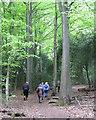 SP1097 : Ascending the Lower Nut Hurst ridge, Sutton Park by Robin Stott
