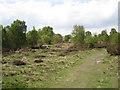 SP1096 : Heathland with birch, Sutton Park by Robin Stott