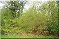 TQ2029 : Coolhurst Wood, Golding Lane by N Chadwick