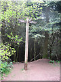 SO9975 : Finger Post at Lickey Hills by Jonathan Barber