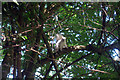 TQ8010 : Albino Squirrel by Oast House Archive