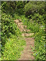 SW7924 : Steps on the coastal footpath above Nare Cove by Rod Allday