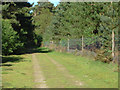 SU9067 : Swinley Forest by Alan Hunt
