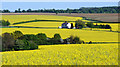 TL3926 : Oilseed Rape fields near Hay Street, Hertfordshire by Christine Matthews