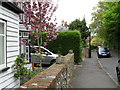 TQ4361 : Spring in High Elms Road by Basher Eyre