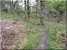 NM6060 : Glenborrodale Nature Reserve Trail by Chris Wimbush