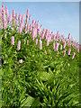 NO5360 : Pink flowers : Week 22