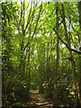TR0335 : Saxon Shore Way in Priory Wood (2) by David Anstiss