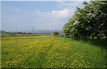 SD7612 : A path through the buttercups by Bill Boaden