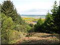 NR7118 : Forestry Commission plantation on Beinn Ghuilean by David Hawgood