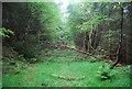 SE9290 : Fallen tree blocks the way! : Week 22