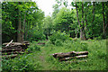 TQ2925 : Clearing in New England Wood by Robin Webster