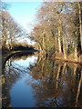 SJ8458 : Reflections on the Cheshire Ring Canal Walk by Martin Lack