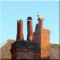 SY6878 : Weymouth Chimney Pots by Jonathan Billinger