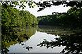 TQ2129 : Hawkins Pond, Buck's Head, Sussex by Peter Trimming