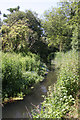 TL6369 : River Snail in Fordham Woods by Bob Jones