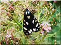 ST8673 : Moth, The Butts, Biddestone : Week 26