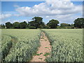 SJ4765 : View of Footpath by Cotton Farm by David Quinn
