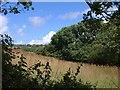 SW8561 : Meadow near Trewassick by Derek Harper