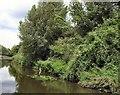 SU8503 : Heron beside canal at Stockbridge by Paul Gillett