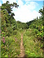 SW7331 : Bridleway between Maen Cottage & Mean Pern by Rod Allday